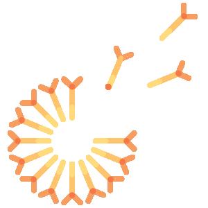 Illustration of Tansy flower